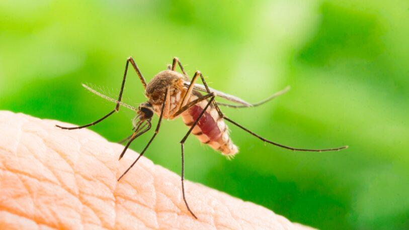 Investigadores argentinos descubren mecanismo clave de los virus de dengue y zika