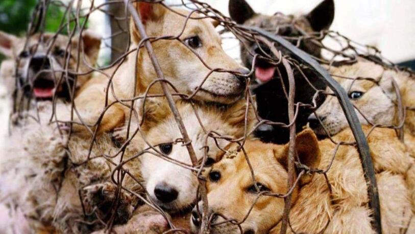 Corea del Sur analiza poner fin al consumo de carne de perro