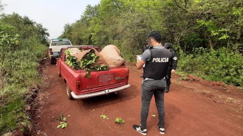 Atraparon a un hombre cuando robaba hojas de yerba