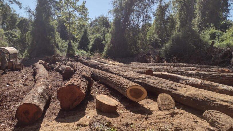 Apeo ilegal: secuestraron máquinas y rollos de maderas nativas