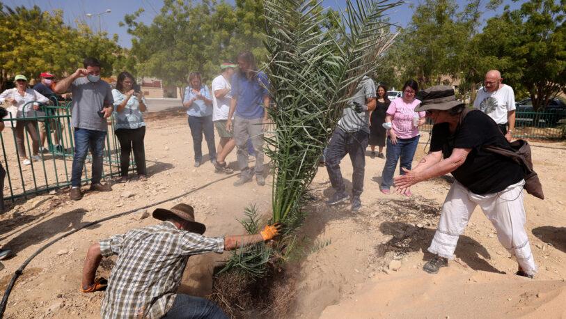 """Israel: Plantaron semillas de la época del """"Reino de Judá"""" y este fue el resultado"""