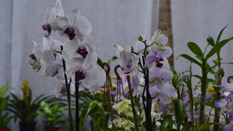 Buscan repoblar con orquídeas el monte nativo