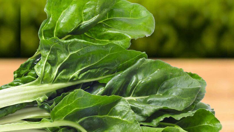 Cómo cultivar Acelga