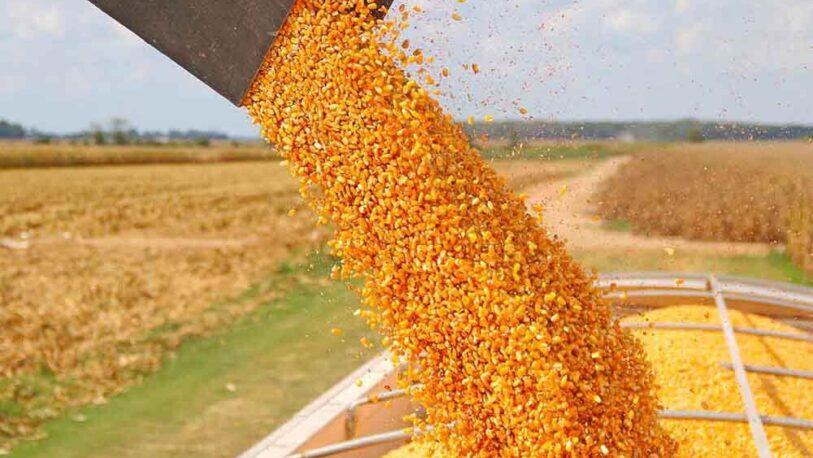 Exportaciones de maíz: El Gobierno puso nuevas trabas y hay quejas de los productores